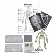 Набор юного врача «Скелет человека»