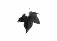 Карандаш чернографитный Derwent Onyx темный
