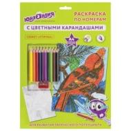 Раскраска по номерам А4, Юнландия ПТИЧКА, С цветными Карандашами, на картоне, 661607